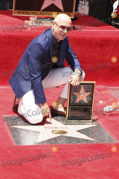 Photos From Pitbull Star on the Hollywood Walk of Fame Ceremony