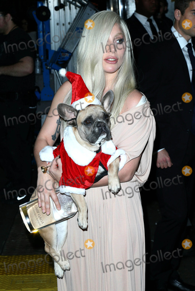 Photo - Photo by KGC-146starmaxinccomSTAR MAXCopyright 2015ALL RIGHTS RESERVEDTelephoneFax (212) 995-1196121115Lady Gaga - holding her dog Koji dressed in a Santa Claus outfit - is seen in New York City(NYC)