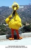 Big Bird Photo -  Big Bird Goes Hollywood Photo by Jeff SlocombGlobe Photosinc